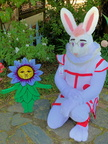 Harvey in Mary Quite Contrary's garden!