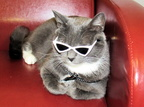 The famous Sunglass Kitty!