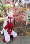 Radjin kneeling with the cherry blossoms!